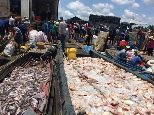 Vụ cá chết trên sông La Ngà: Bộ TN-MT yêu cầu rà soát các nguồn thải