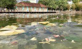 Phú Quốc: Ô nhiễm trên sông Dương Đông chảy ra biển