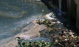 Sông Hàn bốc mùi hôi thối vì nước thải chưa qua xử lý