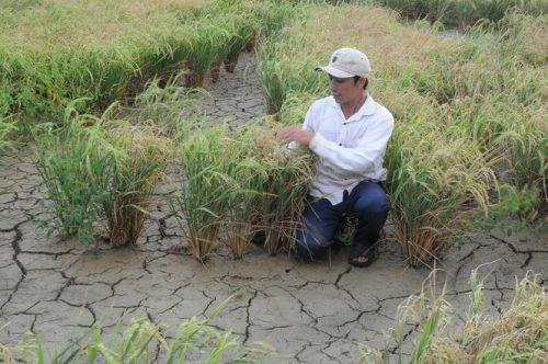 Thủ tướng hỏa tốc chỉ đạo theo dõi dòng chảy sông Mê Kông và xâm nhập mặn ở ĐBSCL