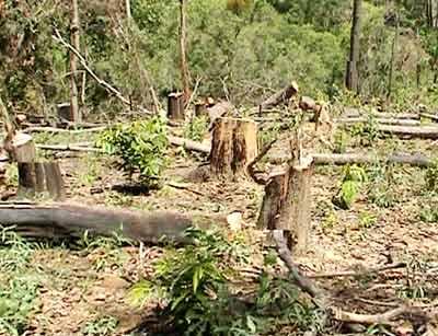 Thuỷ điện quên trả nợ rừng